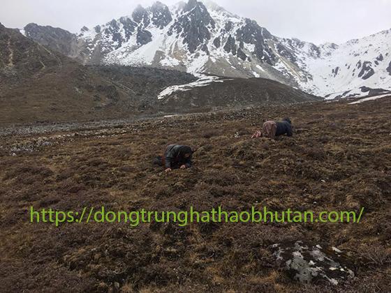 KHAI-THAC-DONG-TRUNG-HA-THAO-BHUTAN-4