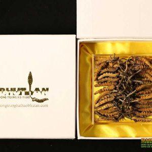 DONG-TRUNG-HA-THAO-BU-TAN-loai-c-1-600x600