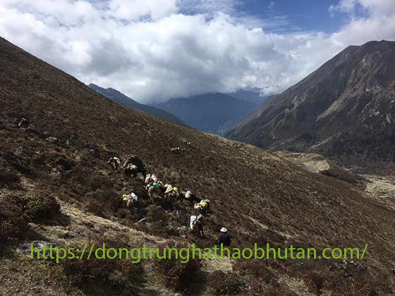 KHAI-THAC-DONG-TRUNG-HA-THAO-BHUTAN-1