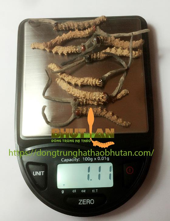 PHAN-LOAI-DONG-TRUNG-HA-THAO-7