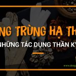 tay-y-noi-gi-ve-tac-dung-cua-dong-trung-ha-thao