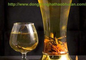 DONG-TRUNG-HA-THAO-BHUTAN-NGAM-RUOU